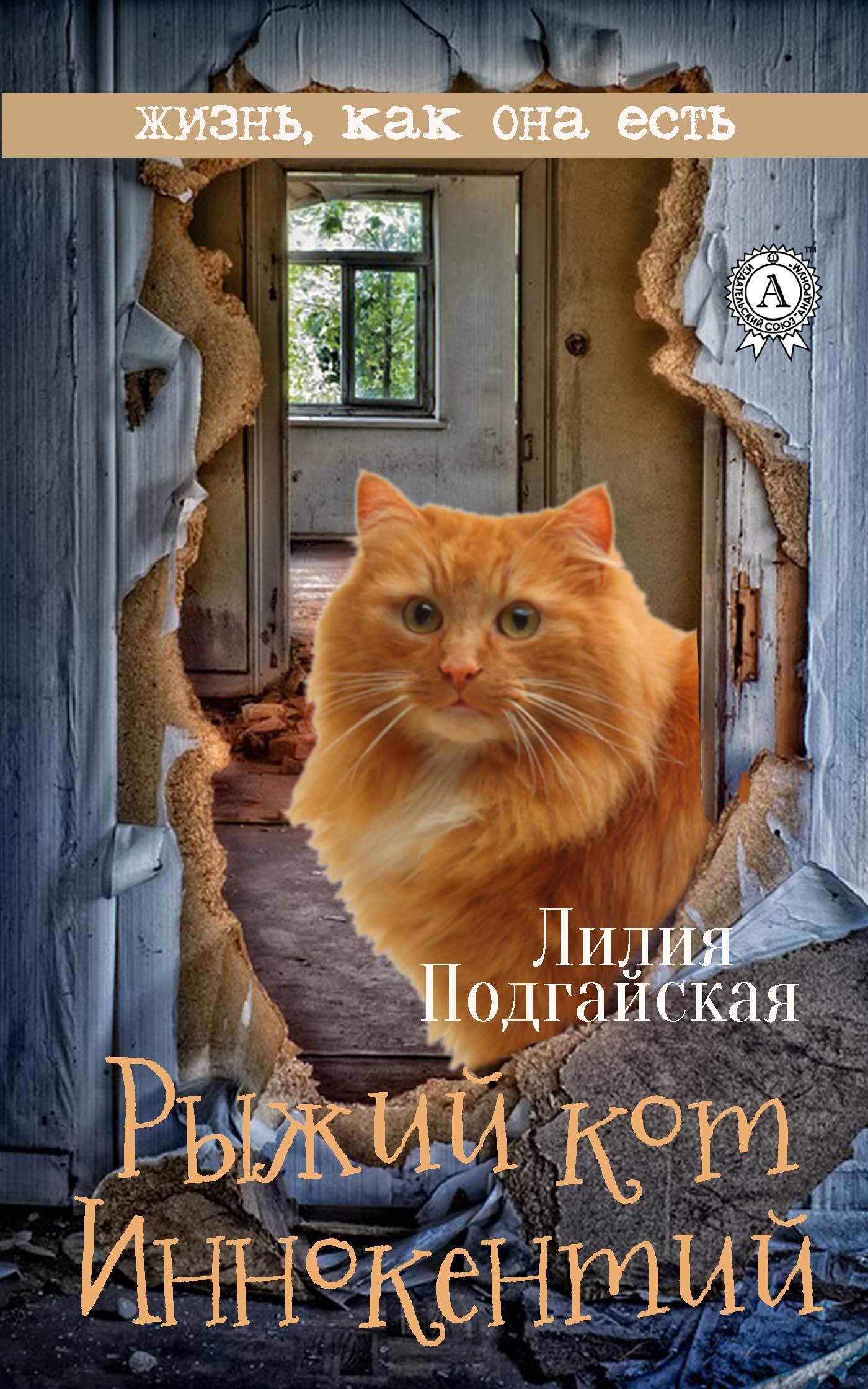 Рыжий кот Иннокентий