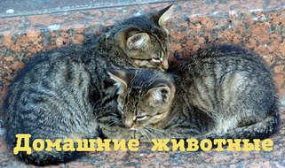 Как нам помогают домашние животные