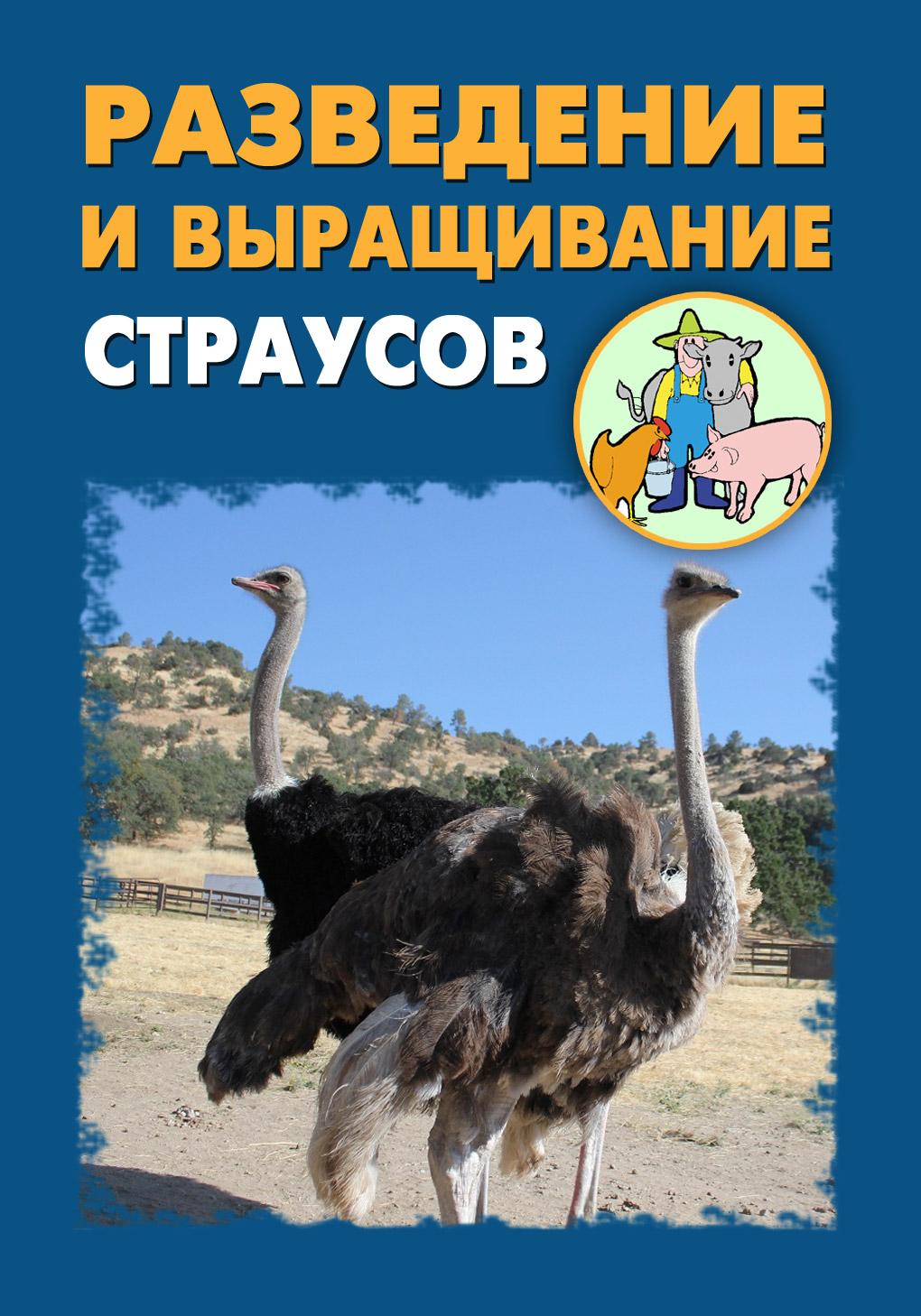 Разведение и выращивание страусов
