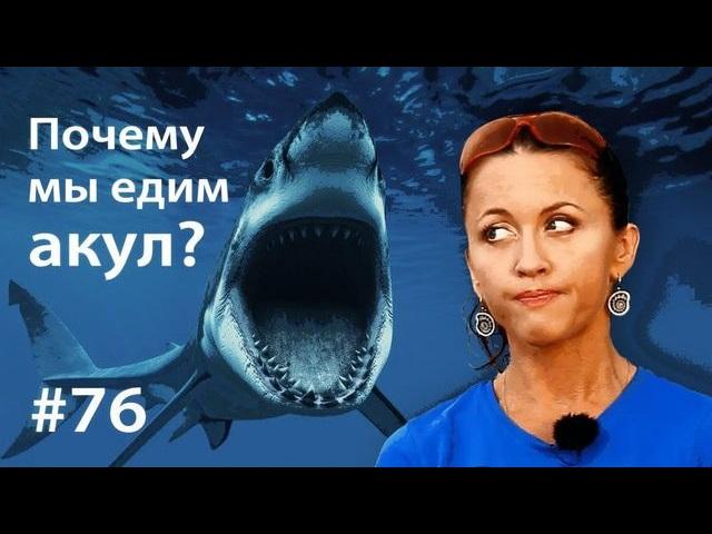 Евгения Тимонова Почему мы едим акул? евгения тимонова сурок наука сна