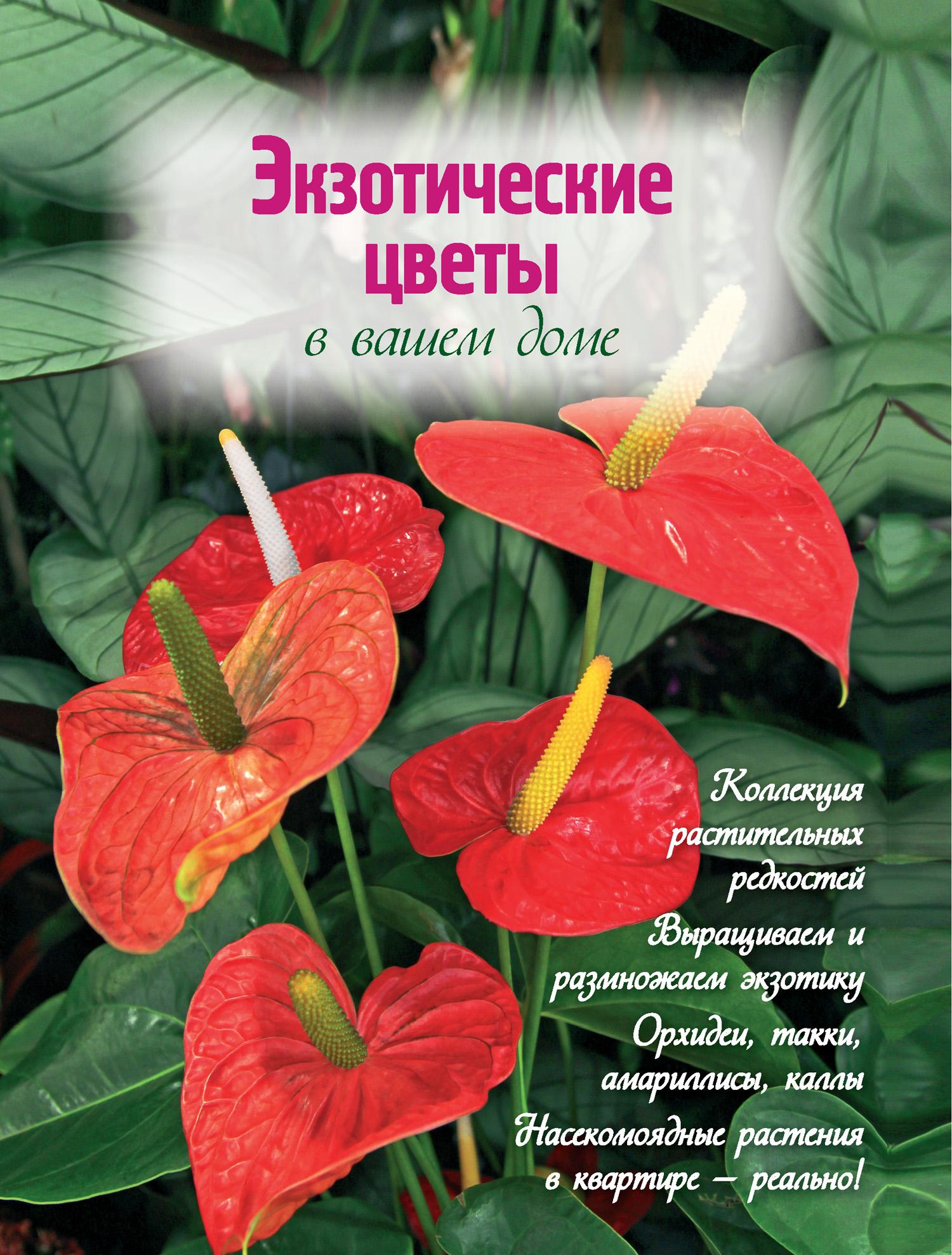 Наталья Власова Экзотические цветы в вашем доме власова наталья цветочный сад в квартире и доме за пять минут