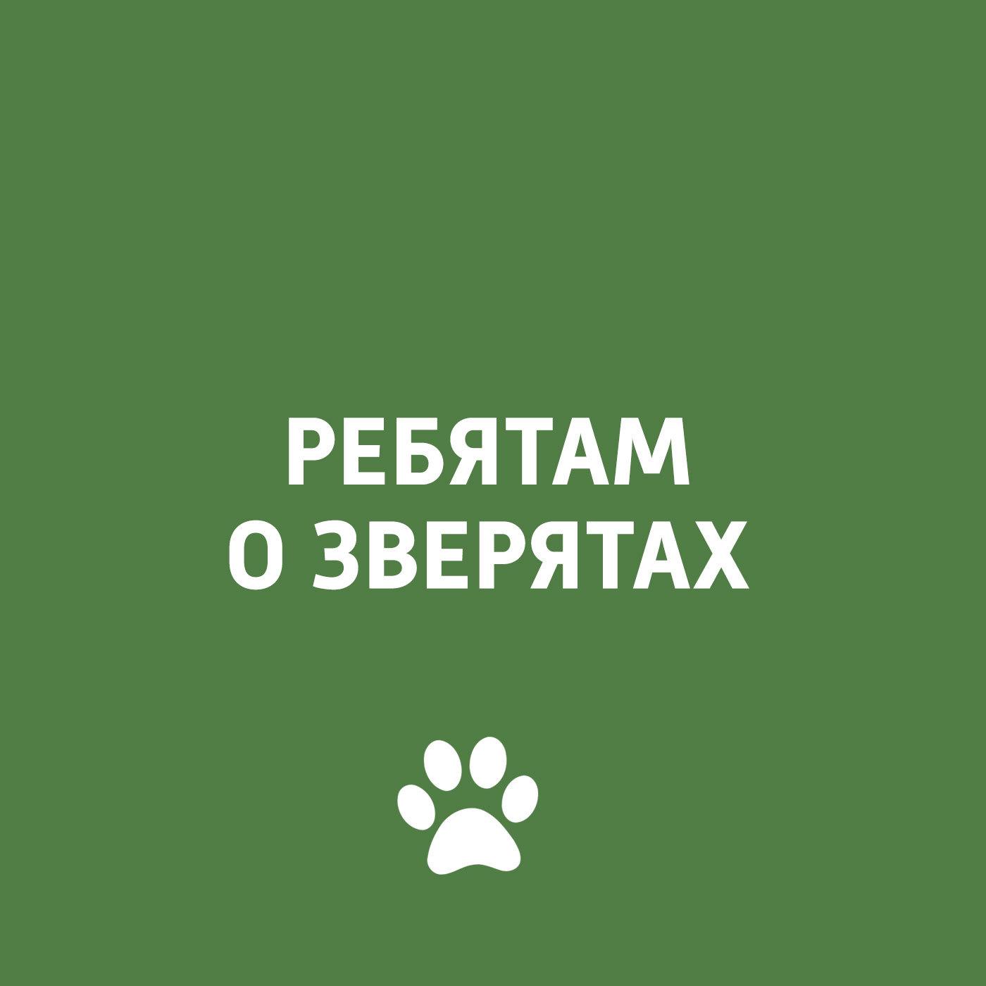 Творческий коллектив программы «Пора домой» Домашние животные