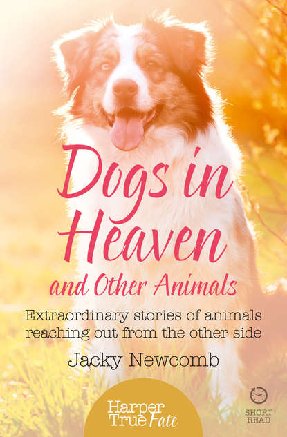 Jacky Newcomb Dogs in Heaven: and Other Animals: Extraordinary stories of animals reaching out from the other side us them