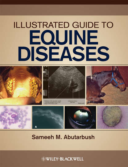 Группа авторов Illustrated Guide to Equine Diseases john dascanio equine reproductive procedures