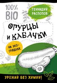 Огурцы и кабачки на экогрядках. Урожай без химии