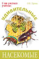 Удивительные насекомые