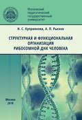 Структурная и функциональная организация рибосомной ДНК человека